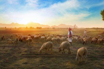 Vocação pastoral condicionada