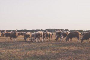 Os presbíteros e seu cuidado pastoral sobre a igreja
